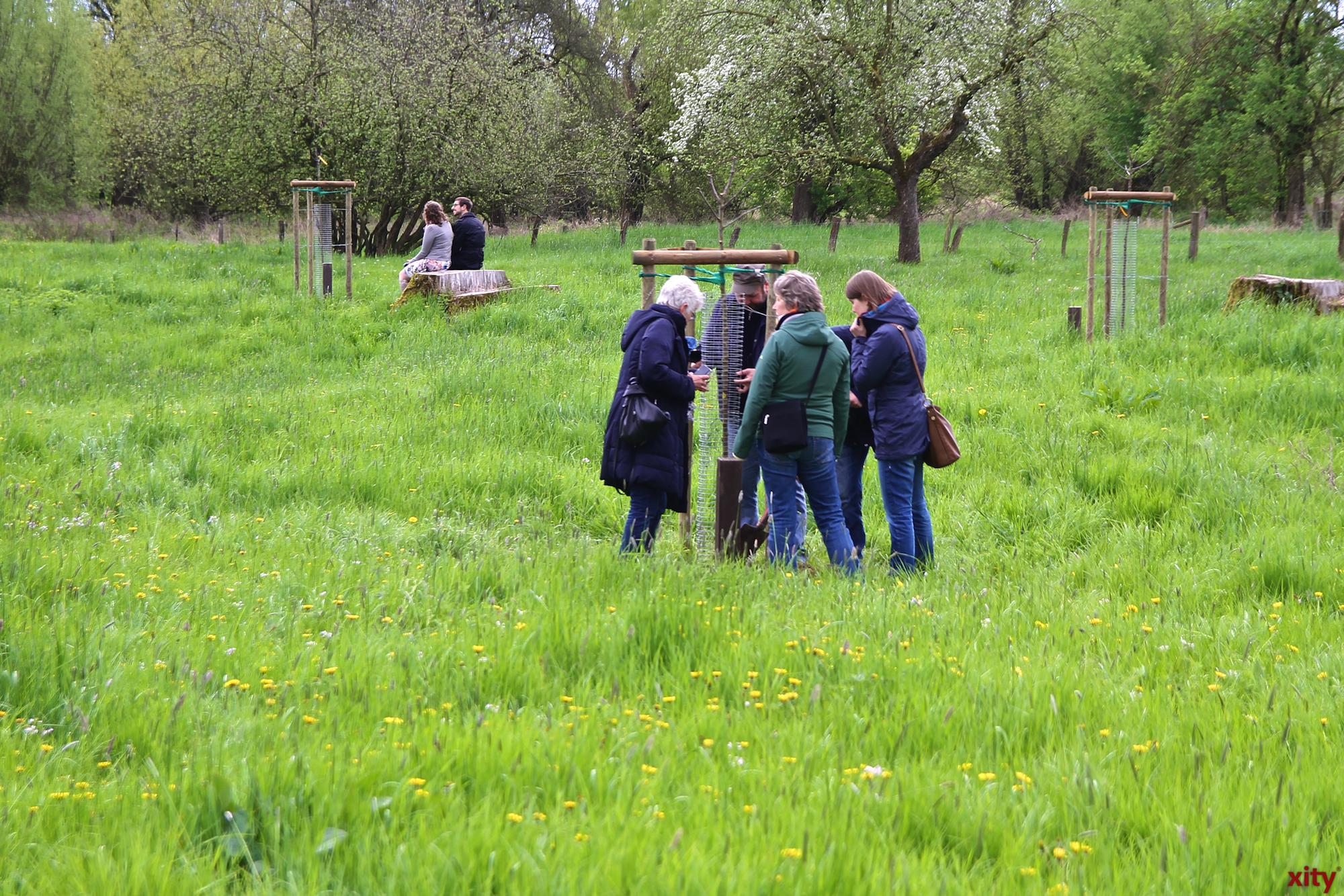 50 neue Bäume sind in der Urdenbacher Kämpe gepflanzt worden (Foto: xity)