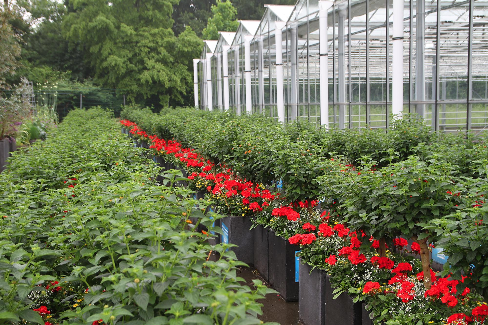 300 der 488 Blumenkübel wurden von der Stadtgärtnerei der Landeshauptstadt Düsseldorf bepflanzt (Foto: xity)