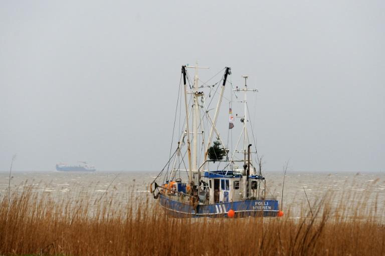 Klimawandel könnte zahlreiche Krabben und Muscheln aus der Nordsee verdrängen (© 2016 AFP)