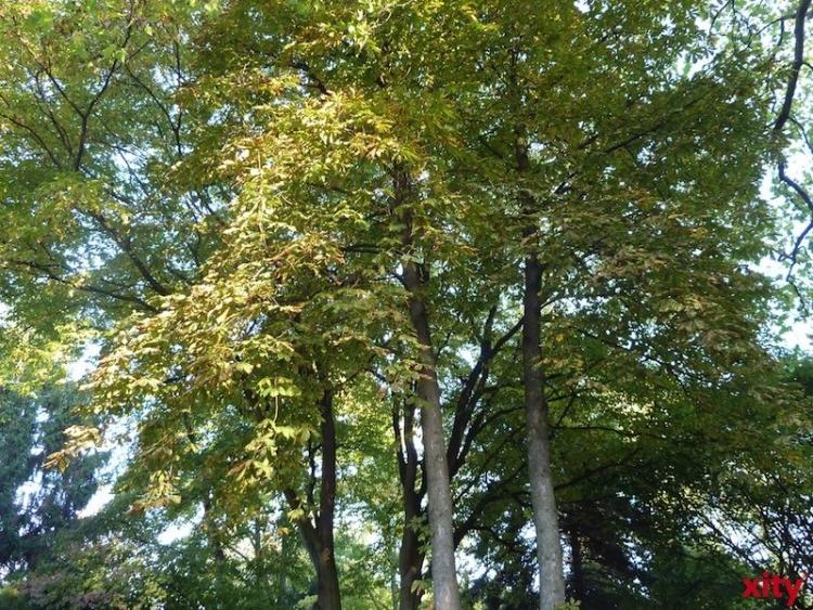 Gartenamt Düsseldorf bietet Führung durch den Hasseler Forst an (Foto: xity)