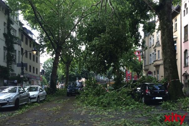 Rund 40.000 Bäume im Stadtgebiet fielen oder wurden stark zerstört, davon allein über 20.000 im Stadtwald (Foto: xity)