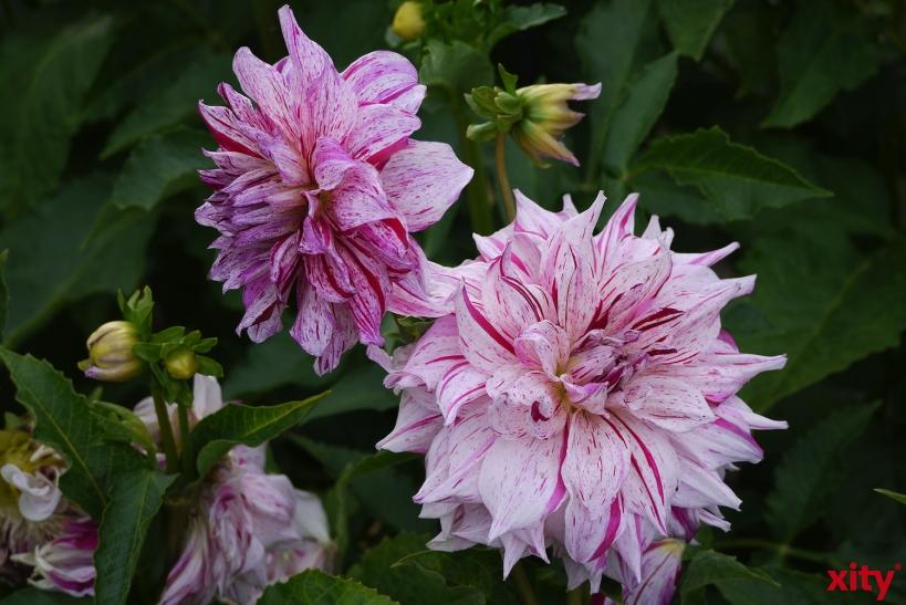 """Noch bis 19. Juni findet zum dreizehnten Mal die """"Woche der Botanischen Gärten"""" statt (Foto: xity)"""