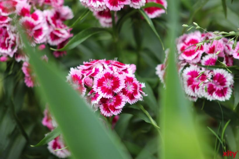 In den Gewächshäusern der Stadtgärtnerei haben die Gärtner für den Sommer eine enorme Vielfalt unterschiedlicher Pflanzen herangezogen (Foto: xity)